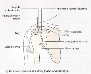Kada ir koks skausmas gali būti klastingos ligos simptomas - Move&Flex Gyvenimas